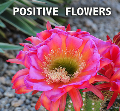 Positive Flowers - Positive Thinking Network - Positive Thinking Doctor - David J. Abbott M.D.
