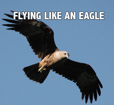 Flying like an eagle - Positive Thinking Network - Positive Thinking Doctor - David J. Abbott M.D.
