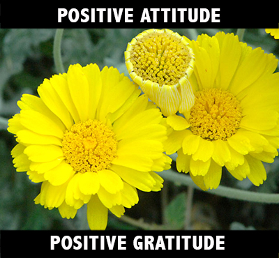 Positive Attitude Positive Gratitude - Positive Thinking Network - Positive Thinking Doctor - David J. Abbott M.D.
