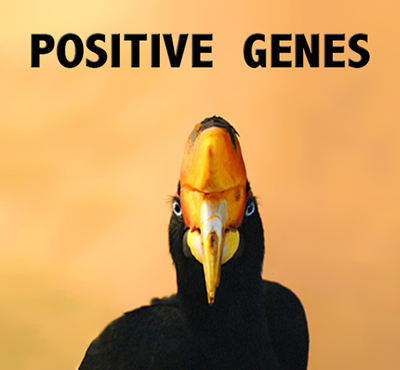 Positive Genes - David J. Abbott M.D.