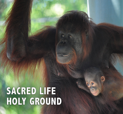 Sacred Life Holy Ground - David J. Abbott M.D.